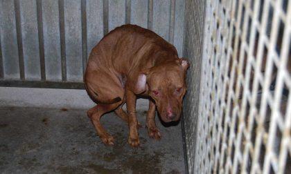 Canile abusivo scoperto nell'Alessandrino: salvati 30 cani
