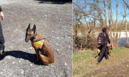 Basta cani avvelenati: cane antiveleno e carabinieri forestali a Tortona