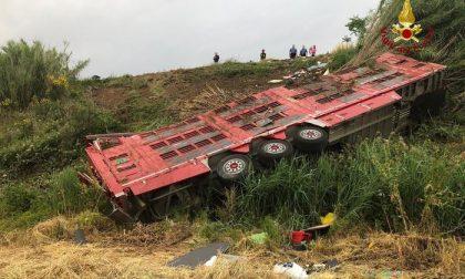 Camion carico di vitelli partito da Alessandria si ribalta sull'Aurelia: muoiono 30 animali