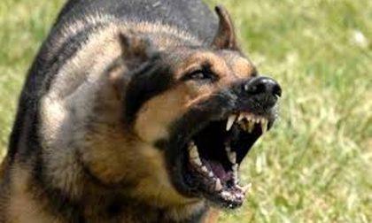 Uomo di 59 anni aggredito dal suo cane