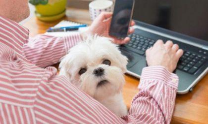 Giornata del cane in ufficio