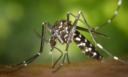 Alessandria: lotta alle zanzare a basso impatto ambientale