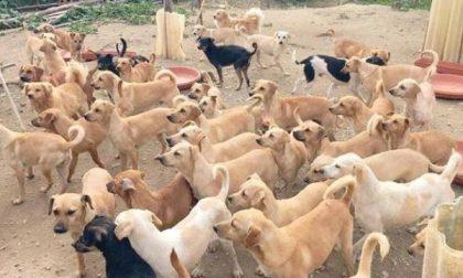 L'alessandrina Paola Lorenzetti a processo per i 101 cani che teneva in casa
