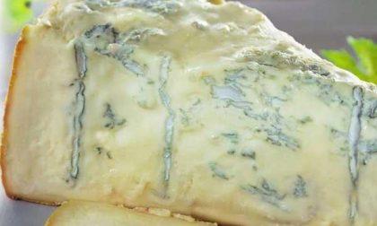 Dazi Usa: colpito anche l'export di Gorgonzola piemontese