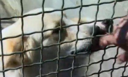 Trovati in un cascinale cani abbandonati senza acqua e cibo
