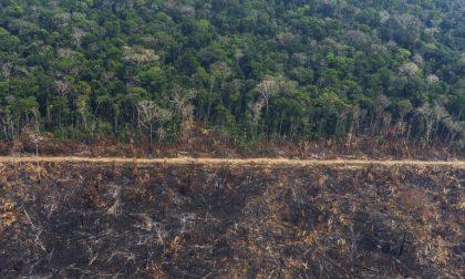 Amazzonia: Confagricoltura d'accordo sul blocco import carni dal Brasile
