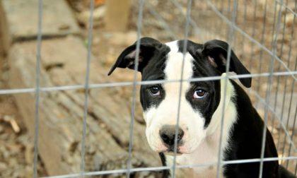 Il Movimento Animalista propone nuove leggi contro il maltrattamento