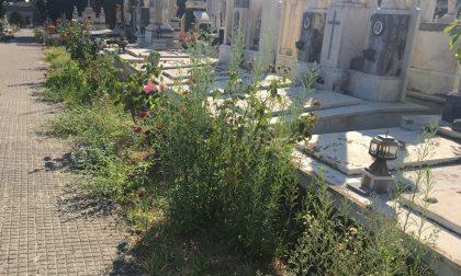 Con 130mila euro ad Alessandria sparisce la giungla da marciapiedi e cimiteri