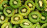 Moria del kiwi per una grave patologia: il Piemonte tra i più colpiti