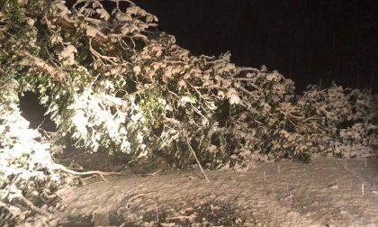 Allerta neve: diversi alberi caduti bloccano la circolazione stradale