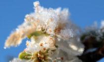 Un inizio primavera tra gelo, vento forte e siccità: gravi danni alle colture
