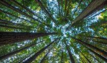 Un nuovo bosco a Tortona, accordo per la realizzazione tra il Comune e Arbolia