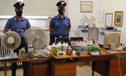 Coltiva in casa marijuana e la spaccia in un bar del centro a Tortona, arrestato 27enne
