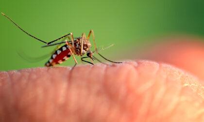 Anche il Comune di Alessandria dichiara guerra alle zanzare