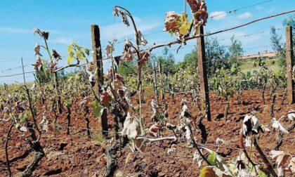 Terreni sempre più aridi: è emergenza siccità in tutto l'Alessandrino